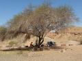עץ השיטה של נחל ארדון