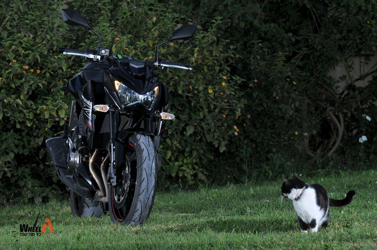 חתול בעור כבש, או משהו כזה...