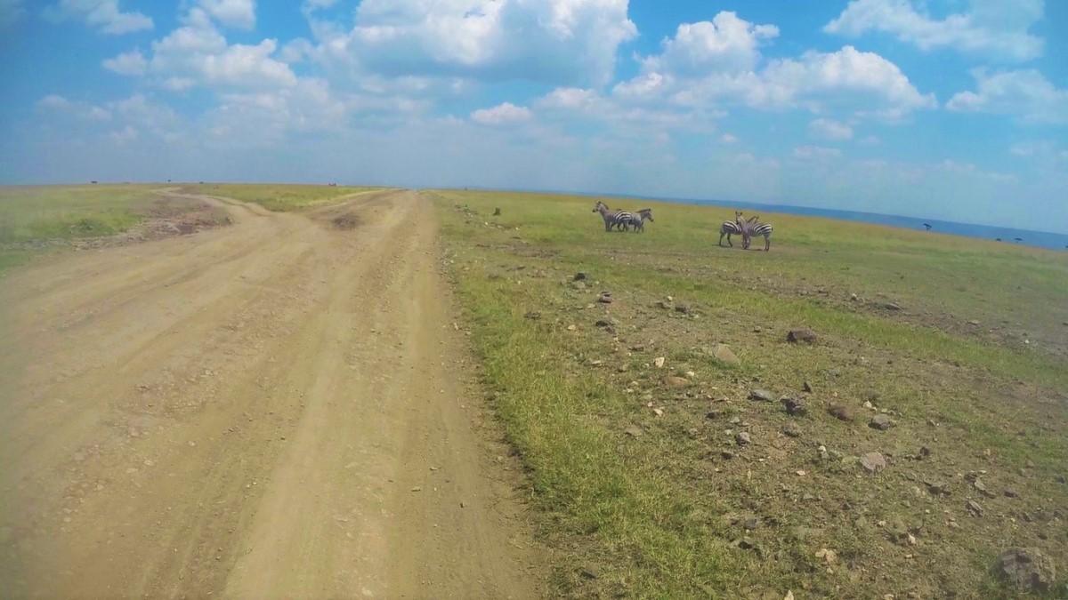 ממשיכים בדרך. ברקע - זברות בקניה