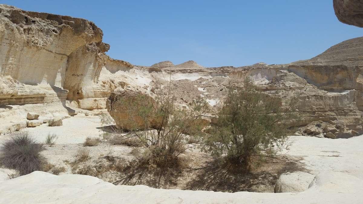 משטחי סלע בגב זרחן